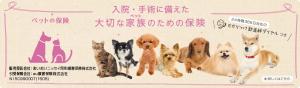 02横(犬・猫)v2